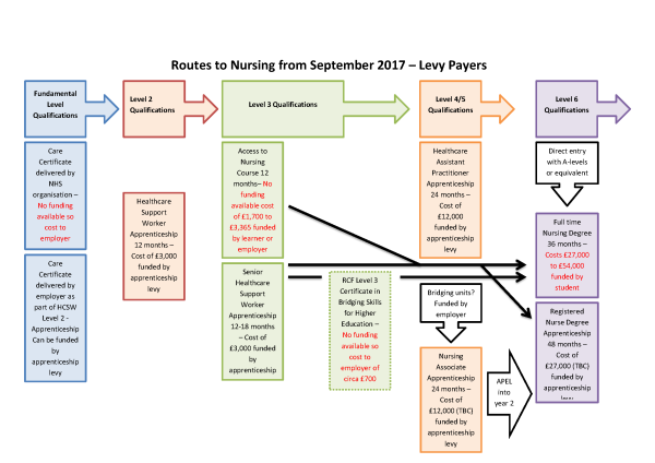 Routes to Nursing Illustrations Levy.png